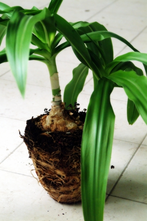 Inspirational Why Do My Indoor Plants Keep Dying? - Homegrown In The Valley My House Plant Is Wilting Picture